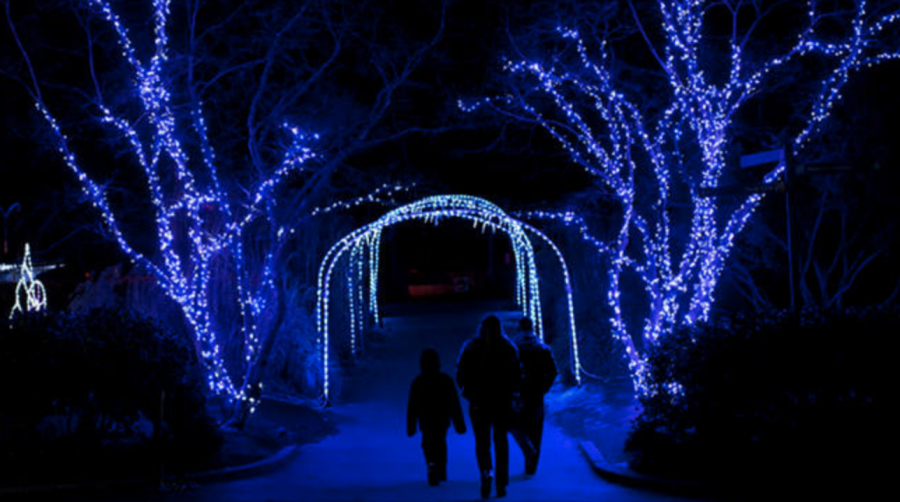 Zoolights+at+the+National+Zoo