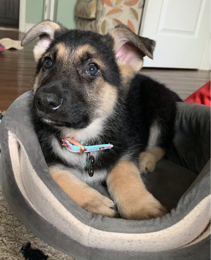 Grace Luis puppy, Bella
